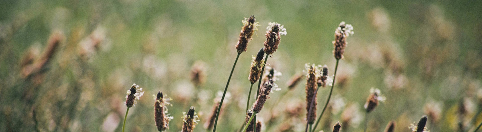 Jardiner Futé en Permaculture